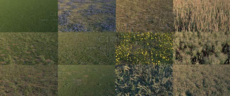 Octane渲染器15套植物场景工程
