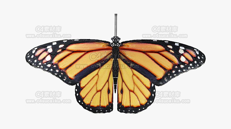 C4素材库-蝴蝶模型