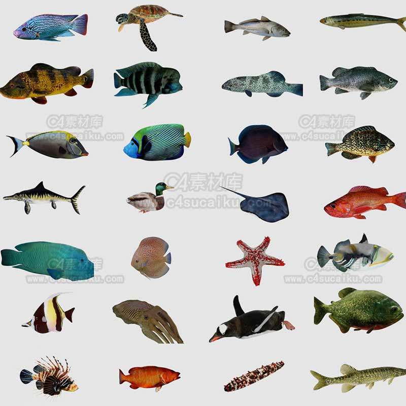C4素材库-40套海洋鱼类C4D模型【带动画】